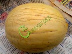 Семена дыни Дыня «Десертная - 5» - одна из ранних и сладких дынь для северных районов. Семенаград - семена почтой