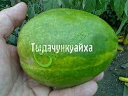Семена дыни Дыня «Тыдачункуайха», выведен в Китае - очень ранний сорт, грушевидные светло-зелёные плоды весом до 1 кг, очень сладкие с необыкновенно приятным ароматом. Семенаград - семена почтой