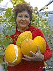 """Семена дыни Дыня """"Узбекская"""" - крупная сладкая узбекская дыня для средней полосы. Семенаград - семена почтой"""
