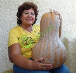 Семена тыквы Тыква «Грасса д'Альба», выведена в Испании - относится к виду мускатных тыкв, сегментированная «груша», в хорошие годы может достигать веса 10-12 кг, редкий эксклюзив, любимица в Испании. Семенаград - семена почтой