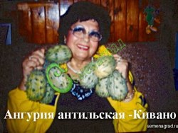 Семена почтой Ангурия антильская (кивано) или антильский огурец - 10 семян, применяют в пищу зеленцы, у спелых съедобная мякоть
