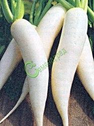 Семена редьки лобо Лобо - 1 уп.-10 семян - китайская редька-редис - близкий родственник дайкона, агротехника такая же. Семенаград - семена почтой