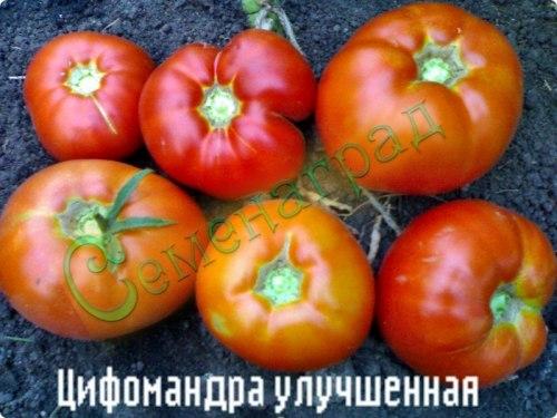 Семена томатов Цифомандра улучшенная (сорт томата) - высокорослый, до 300 г, розовый, эффектный. Семенаград - семена почтой