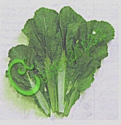 Семена Горчица китайская - 30 семян - листовая салатная горчица, очень нежная, слабоострая