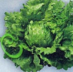 Семена салата Салат кочанный «Крупнокочанный» - сравнительно редкое овощное растение, раннее, нежные кочанчики незаменимы в салатах и свежем виде. Семенаград - семена почтой