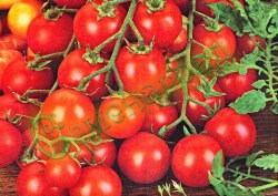 """Семена томатов Черри Гарденер Делайт (""""Восторг садовника""""), выведен во Франции - высокорослый, усыпной, удачная разновидность Черри. Семенаград - семена почтой"""