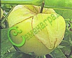 Семена физалиса Физалис овощной «Кондитер» - 1 уп.-30 семян - ранний сорт ягода 60-100 г, пригоден для консервирования, варенья, цукатов. Приятен в свежем виде. Семенаград - семена почтой