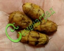 Клубеньки чуфы Чуфа - земляной орех - однолетнее растение, клубеньки чуфы весом 1 г по вкусу напоминают орехи. Её используют в сыром, печеном и отварном виде и как заменитель кофе. Семенаград - семена почтой