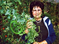Бриония белая (переступень белый) - лазящее, многолетнее растение, быстро развивает густую сочную зелень и закрывает пространство 3-5 м в высоту и почти столько же в ширину. Используется для декорирования веранд, стен и специальных конструкций, многолетник, надземная часть на зиму отмирает, семена сажать под зиму или стратифицировать 2 месяца, лекарственное растение, ягоды брионии несъедобны. Семенаград - семена почтой