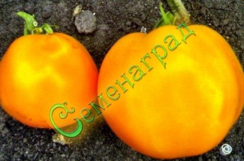 Семена томатов Бычье сердце оранжевый - высокорослый, до 500 г, ранний. Семенаград - семена почтой
