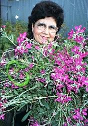 Семена почтой Маттиола седая розовая, 30 семян, однолетник, цветки розовые, 50 см. Листья опушенные.