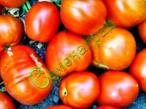 Семена томатов Китайский грунтовый - среднерослый, ранний, до 200 г, надежный. Семенаград - семена почтой