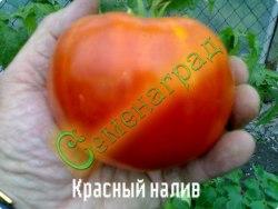Семена томатов Красный налив - среднерослый, очень ранний, до 200 г, урожайный. Семенаград - семена почтой