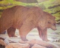 Мишень J.V.D. Медведь