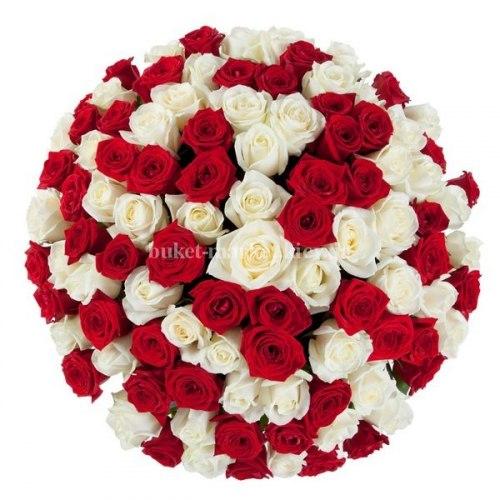 Букет 101 красная и белая роза - 70 см