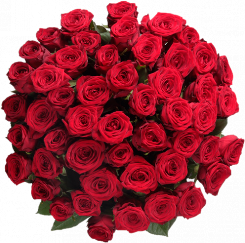 Букет 51 роза Гран При 70 см