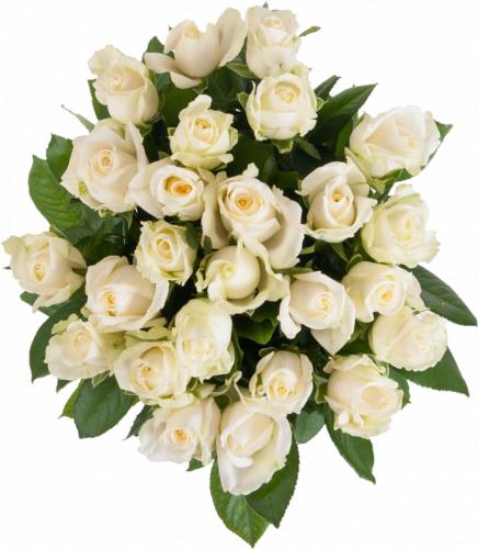 Букет из белых роз Аваланч (25 шт./80 см)