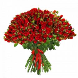 Букет из кустовой розы (51 шт./70-80 см.)