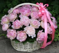 Корзина розовых пионов 35 шт.