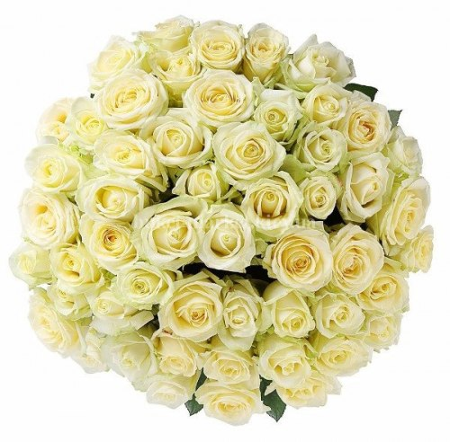 Букет из белых роз Аваланч 50 см - 51 шт