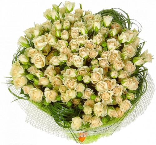 Букет из кремовых кустовых роз 25 шт - 70 см
