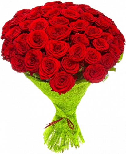 Букет красных роз 51 шт, 70 см
