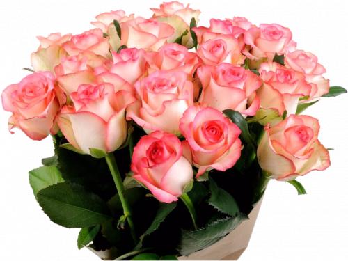 Букет из розовых роз (21 шт./70 см.)