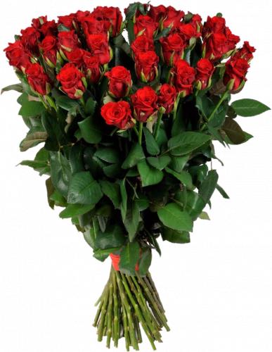 Букет из красных роз Маричка (51 шт./90 см.)