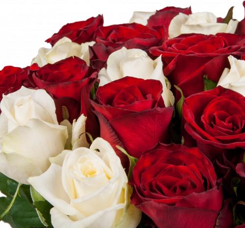 Нонна (розы: 25 шт./70 см.)