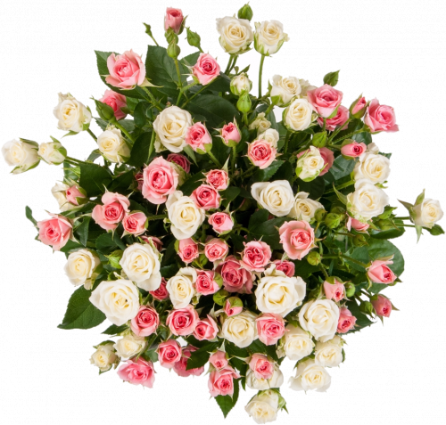 Альбина (роз: 19 шт./70 см.)
