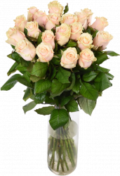 Букет цветов из кремовых роз Талея 21 шт, 70 см