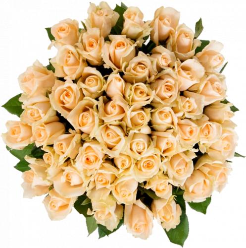 Букет из 51 розы Пич Аваланч 51 шт, 60 см