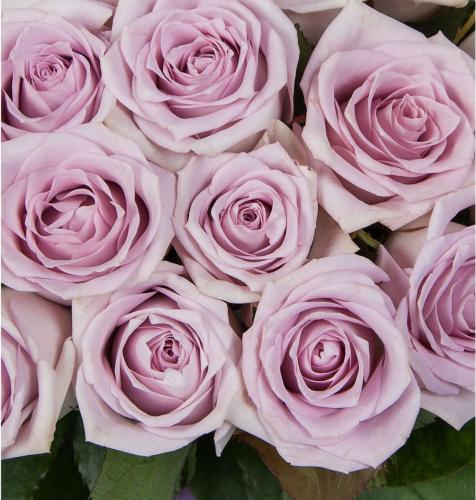 Букет из фиолетовых роз сорта Fifth Avenue (19, 25, 51, 75 или 101 шт./60 см.)