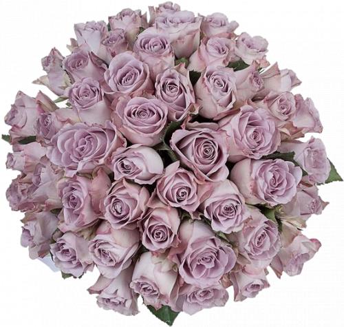 Букет из роз сорта Memory Lane (19, 25 или 45 шт./40 см.)