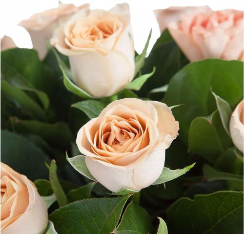 Букет из роз сорта Cappucino (35 шт./60 см.)