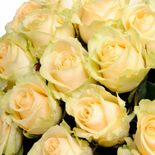 Букет из кремовых роз Пич Аваланч 35 шт, 70 см