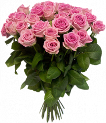 Букет из розовых роз Аква (33 шт./70 см)
