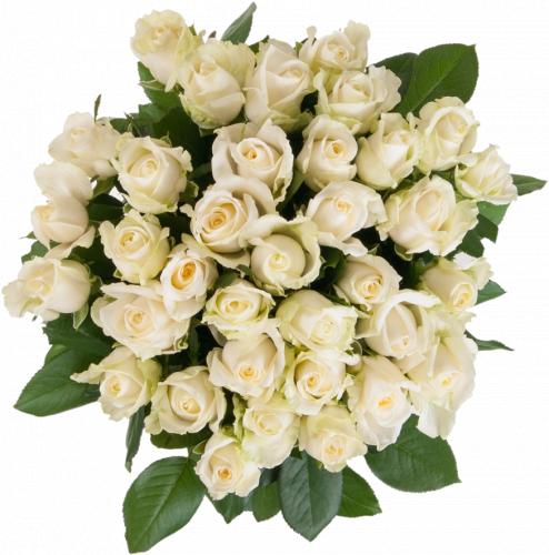 Букет из белых роз Аваланч (35 шт./60 см)