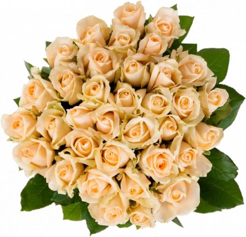 Букет из кремовых роз Пич Аваланч 35 шт, 60 см