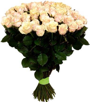 Букет из кремовой розы Талея (51 шт./70 см.)