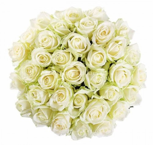 Букет белых роз Аваланч 35 шт, 50 см