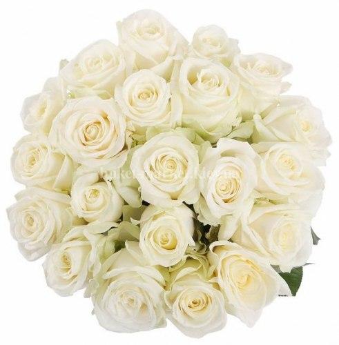 Букет ьелых роз Аваланч 21 шт, 50 см