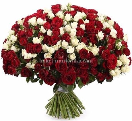 Букет из красных и белых кустовых роз 70 см - 101 шт