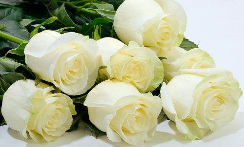 35 роз Мондиаль 90-100 см