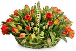 131 красный тюльпан в корзине