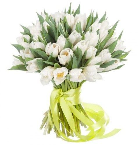 51 белый тюльпан с длинной лентой