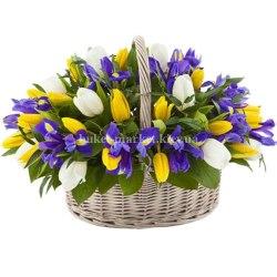 Корзина из ирисов и тюльпанов 57 шт