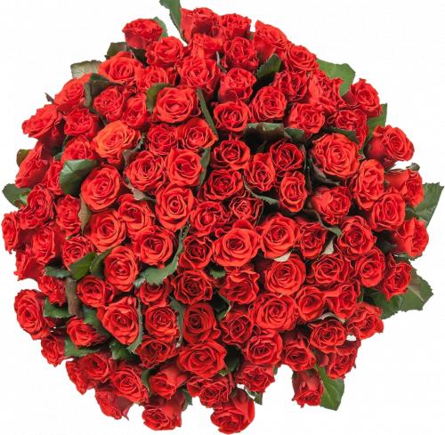 101 красная роза - 60 см