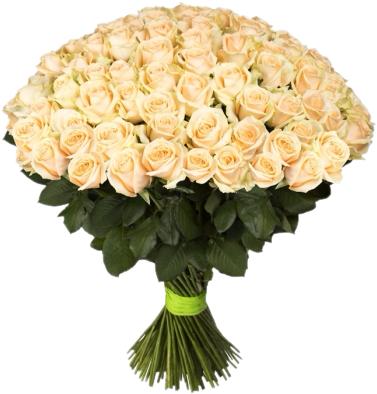 Букет 101 кремовая роза - 70 см