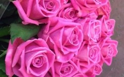 "Букет роз ""Розовая Пантера"" 25 роз"